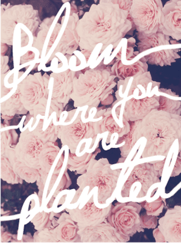 bloomprintablequote