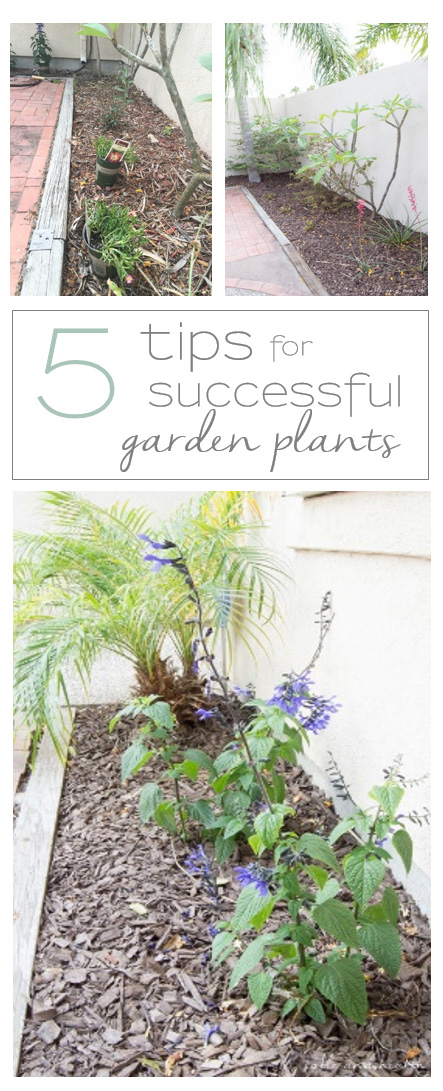 5 Tips to Successful New Plants - Get your new garden additions of to the best start you can give them with these five simple tips, plus find tons of inspiration with Monrovia! #growbeautifully #monroviaplants